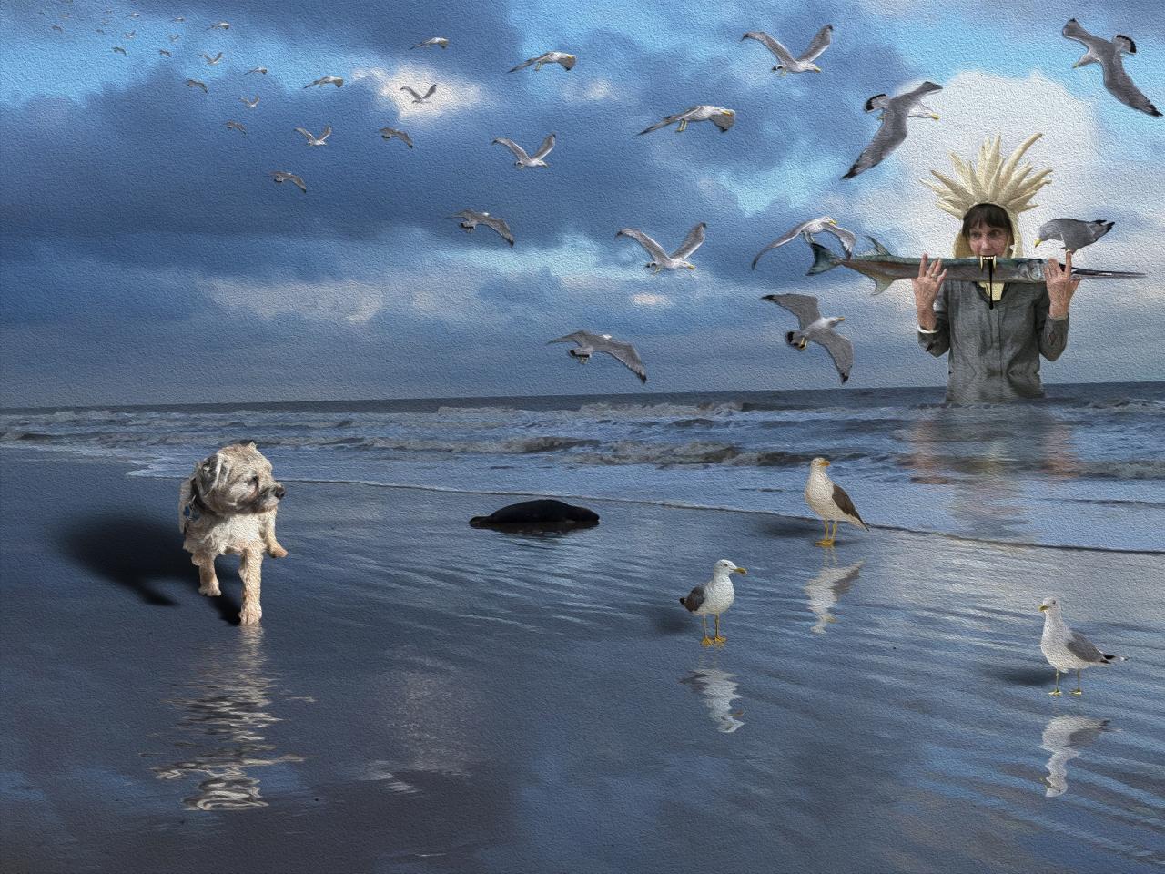 sally-sea-monster-gulls-1
