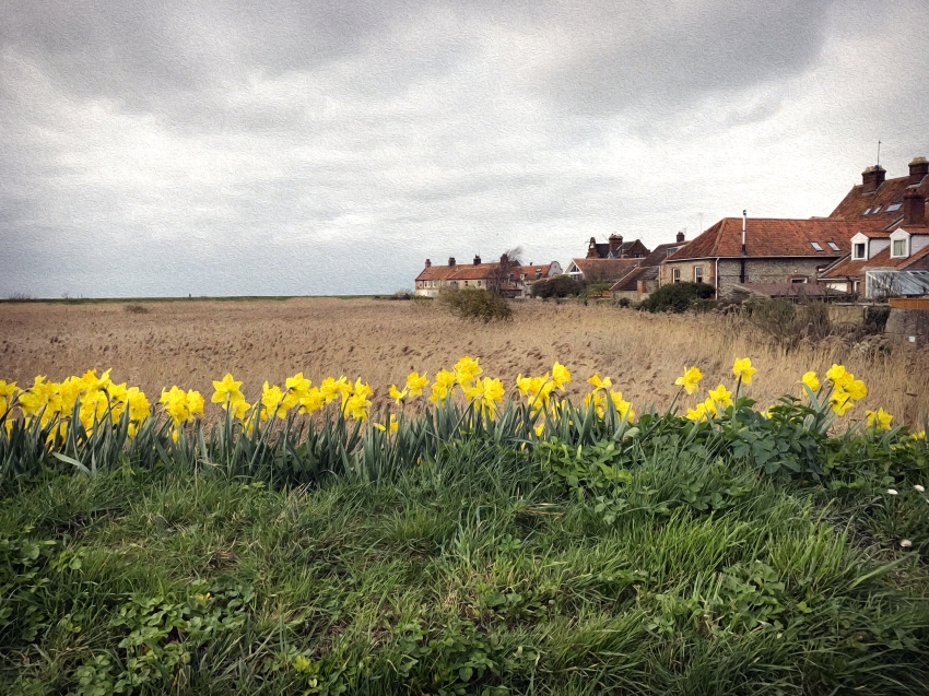 Cley-Next-The-Daffodils